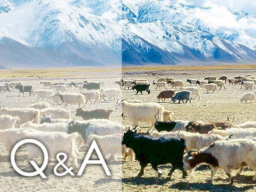 羊絨 羊毛保養難? 5個小叮嚀告訴妳